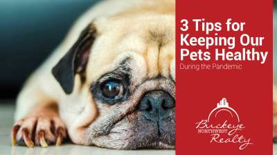 3 Tips for Keeping Our Pets Healthy During the Pandemic